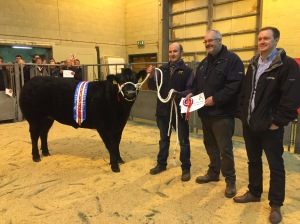 Champion Heifer from Balfour Baillie with Orkney Media Group and HIS Ltd Sponsors