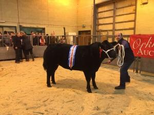 Champion Heifer