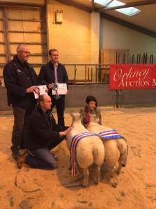 Champion pair of Lambs from James Cowe with Orkney Media Group and His Ltd Sponsors ( Andrew and Freddie)