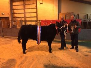 Champion Heifer selling for £2500 with Thorfinn Craigie Brig Larder Kirkwall