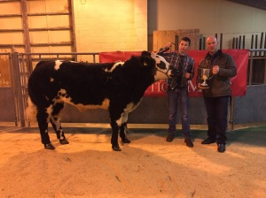 Champion Young Farmer Steer shown by Calum Taylor purchased by Thorfinn Craigie Brig Larder Kirkwall